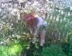 Jarní květy - fotoalbum č. 22700